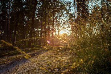 zonsondergang van Kristof Ven