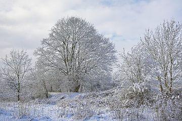 Sneeuwlandschap met kale bomen en struiken in Vlaanderen. von Kristof Lauwers