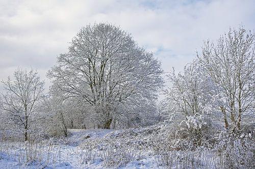 Sneeuwlandschap met kale bomen en struiken in Vlaanderen.