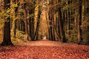 Herfstwandeling in het Amsterdamse Bos van Natascha Velzel
