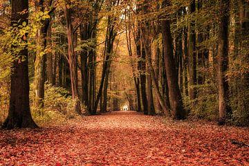 Herbstspaziergang im Amsterdamse Bos von Natascha Velzel