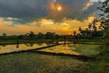 Zonsondergang tussen de rijstvelden bij de historische stad Anuradhapura Sri Lanka van Thijs van Laarhoven