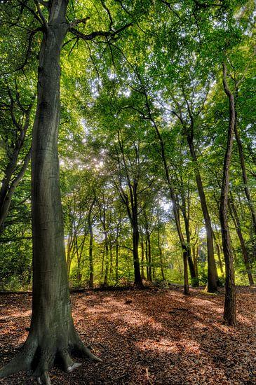 Zomer in het bos van M DH