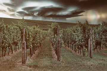 Weinberge in der Pfalz von Norman Krauß