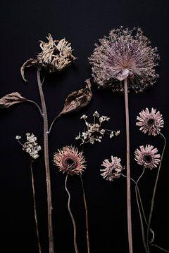 tuin van gedroogde zomerbloemen van Karel Ham