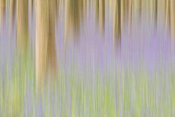 Voorjaars Bos in beweging van Elles Rijsdijk