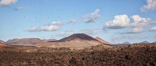 Lanzarote landscape panorama