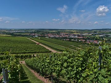 De wijngaarden van Abstatt van Timon Schneider
