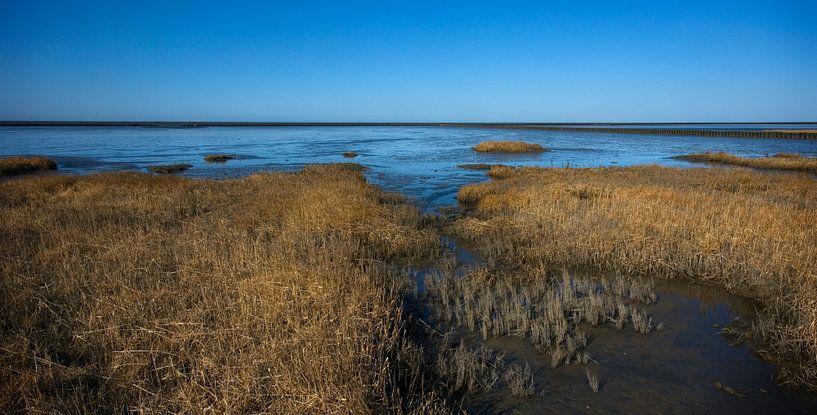 Kwelder in de Waddenzee 2 van Bo Scheeringa Photography