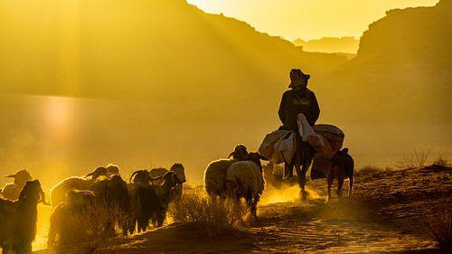 Schapenhoeder met hond en schapen in Wadi Rum, Jordanië