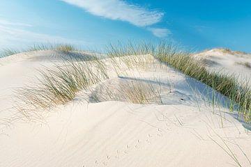 Helmgras auf Flugsand von Fotografie Egmond