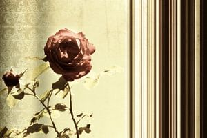 Pair of roses van Dagmar Marina