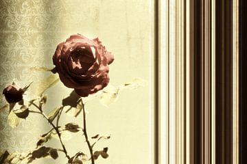 Pair of roses van