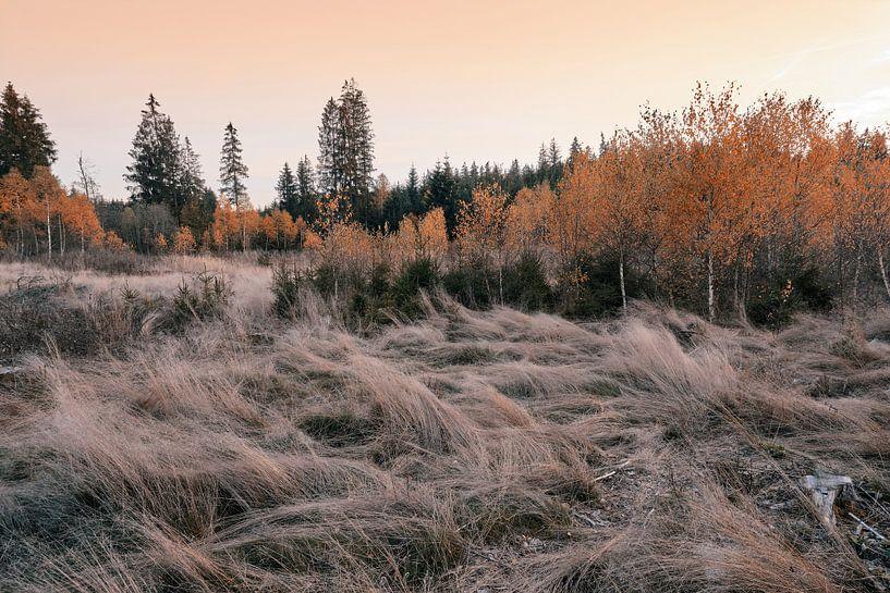 Herbstlicht von Max Schiefele