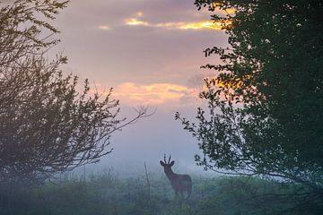 Reebok bij zonsopgang van Gert-Jan Nijskens