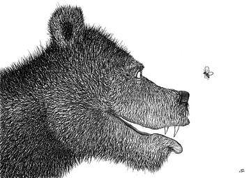 De beer en de vlinder van DuFrank Images