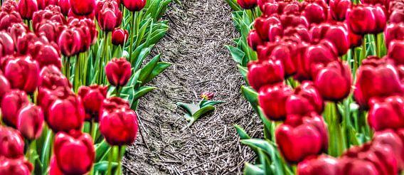 Fallen Tulip van Alex Hiemstra