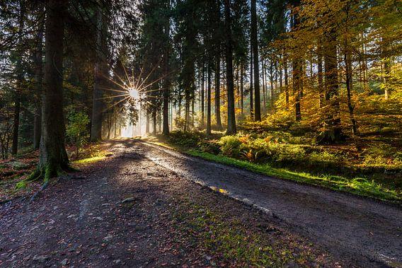 Goodmorning Autumn
