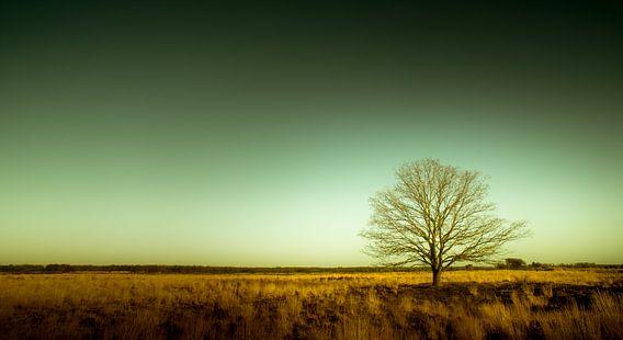 Groote Heide 9 van Desh amer