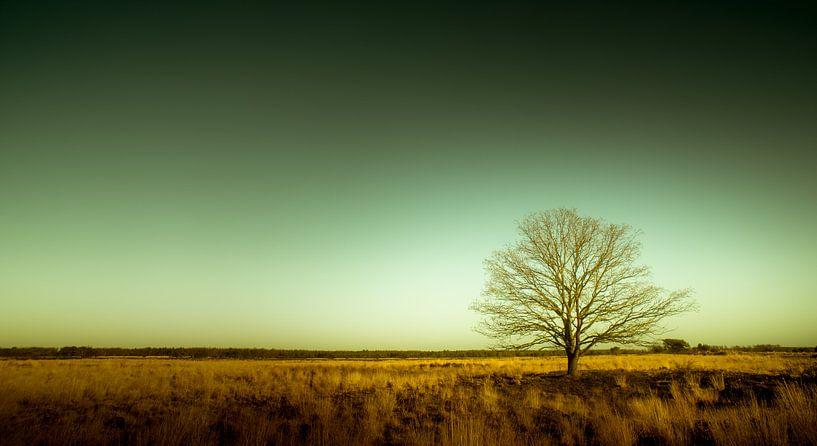 Groote Heide 9 von Deshamer