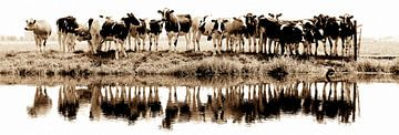 cows in a row (sepia) - gezien bij vtwonen van Annemieke van der Wiel