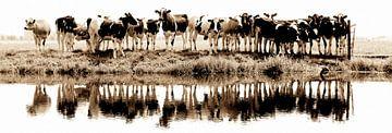 cows in a row (sepia) sur Annemieke van der Wiel