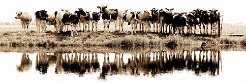 Kühe in einer Reihe (sephia) von Annemieke van der Wiel
