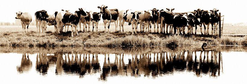 cows in a row (sepia) van Annemieke van der Wiel