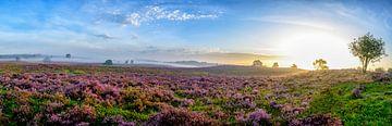 Blühende Heidepflanzen in Heide-Landschaft bei Sonnenaufgangspanorama von Sjoerd van der Wal