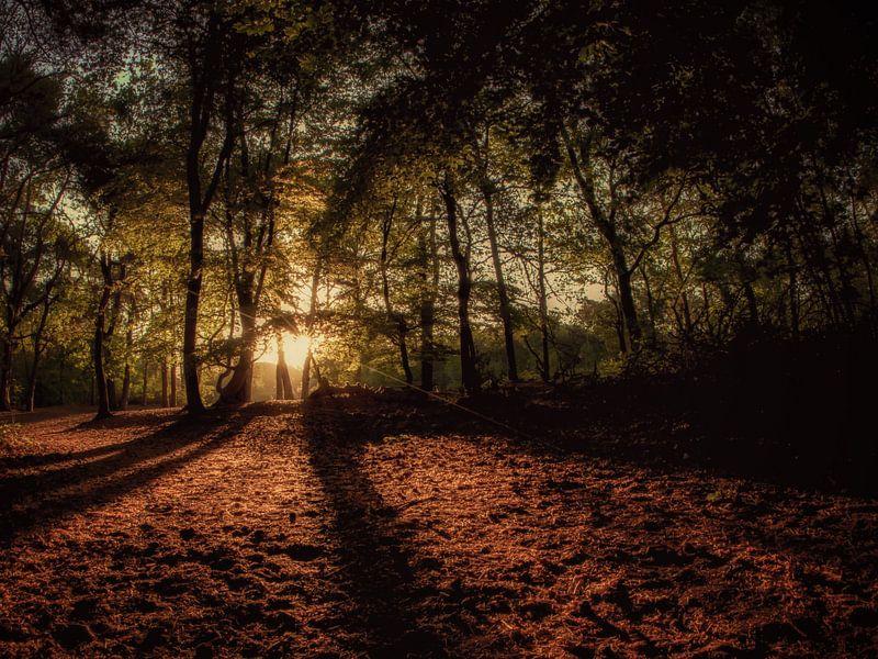 Eerste licht in het bos. van Lex Schulte