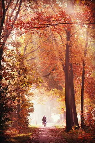 awesome fall! herfst!  van
