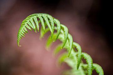 Groene Varen van Barbara Koppe