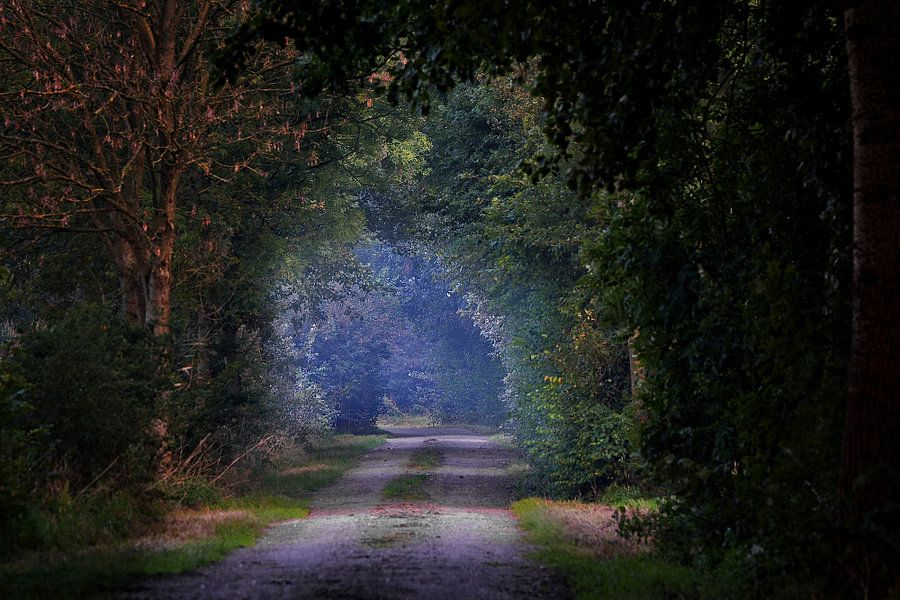 Het magisch pad.