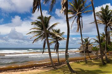 Kust Barbados van Elly Damen
