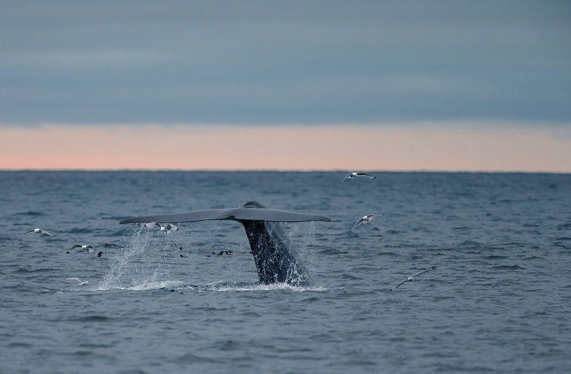 Der Schwanz des Blauwals von Menno Schaefer