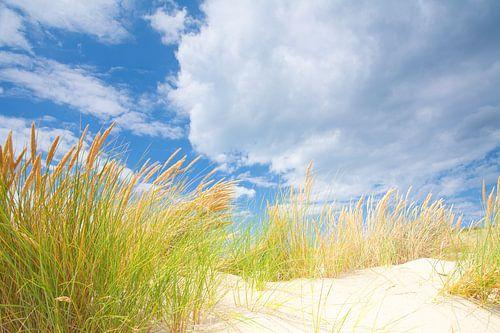 Duin landschap aan de kust met zon en een mooie wolkenlucht