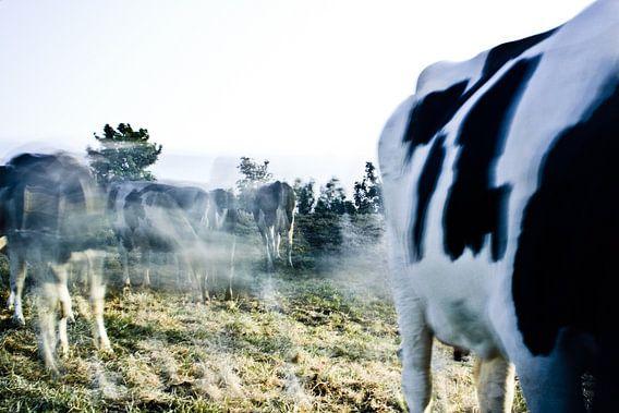 Beweging van de dieren in het Groningse landschap.