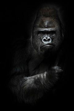 krachtige dominante mannelijke gorilla van Michael Semenov