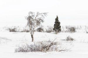 Winter landschap