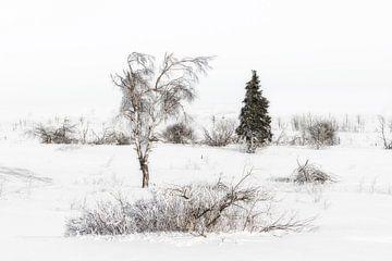 Winter  von Ingrid Van Damme fotografie