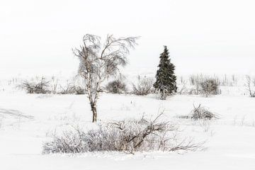 Winter  sur Vandain Fotografie
