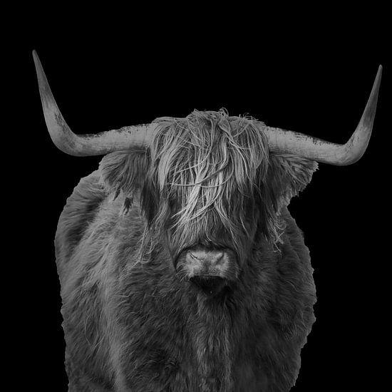Portret van een Schotse hooglander in zwart wit van Menno Schaefer