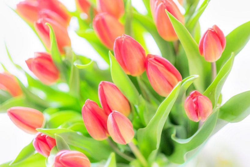 Spring is here van Richard Marks
