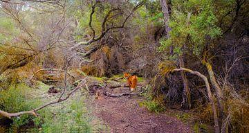 Spooky bos met vos, Nieuw Zeeland van Rietje Bulthuis