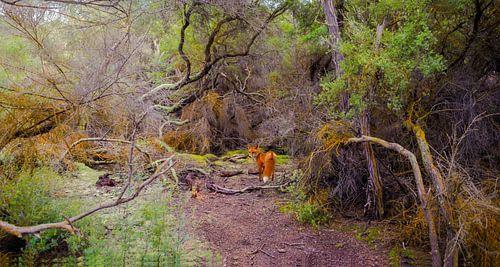Spooky bos met vos, Nieuw Zeeland