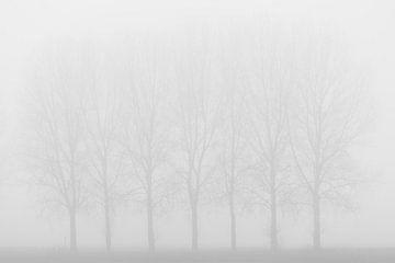 Silhouetten im Nebel. von Rik Verslype