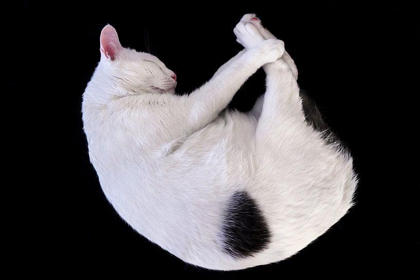 Kat in slaap van Tim Wong