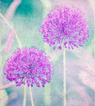 Allium von Kirsten Warner