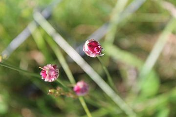 kleine roze bloemen van Danielle Vd wegen