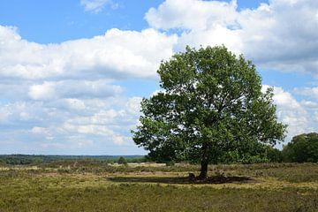 Een boom op de Ermelosche heide van Gerard de Zwaan